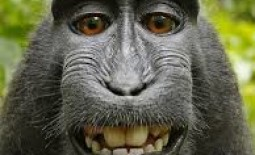 Can A Monkey Own a Copyright?